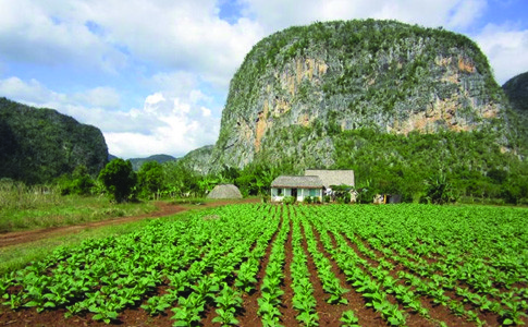 agroforesterie_home_toufa_images_2