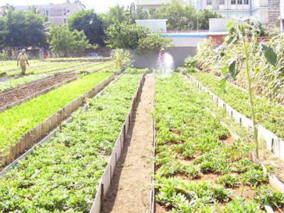 6-cuba-agriculture-b8699
